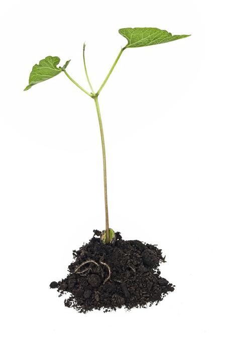 crecimiento-ticapisco